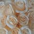 Decoratie Geur Roosjes 9st. in kartonnen geschenkdoosje Champagne